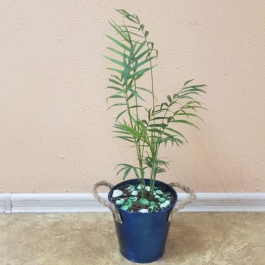 Пальма хамедорея: букеты цветов на заказ Flowwow
