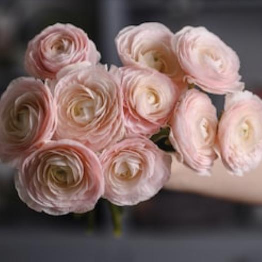 Букет из ранункулюсов 9шт: букеты цветов на заказ Flowwow