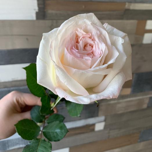 Сортовая АРОМАТНАЯ Роза O Hara