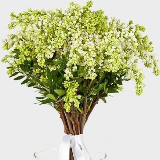 "Букет ""Белая сирень"": букеты цветов на заказ Flowwow"