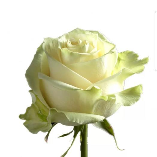 Роза белая 70 см