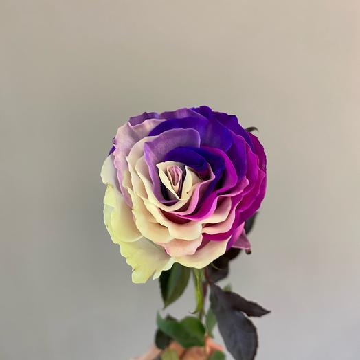 Розы Bubble gum