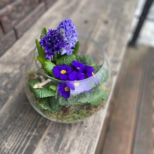 Аквариум с первоцветами