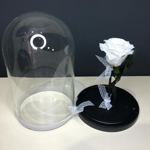Роза белая  в колбе ( бутон до 6 см)