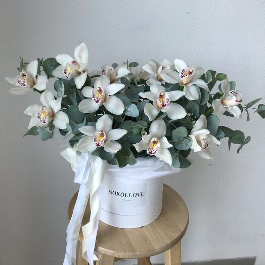 Макси орхидеи в коробке