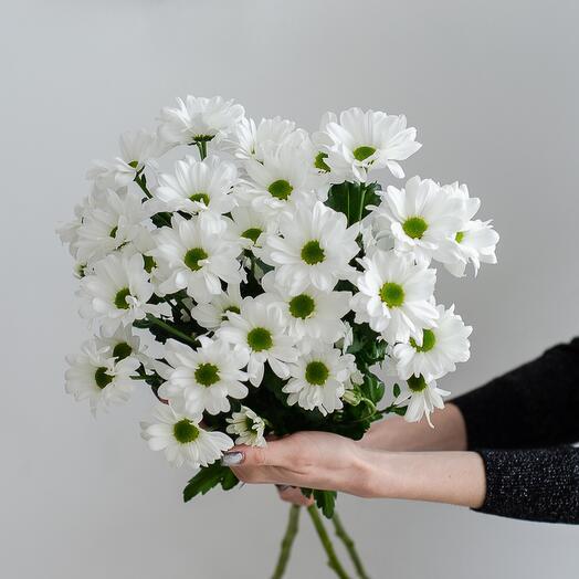 Flowers Lowers - 3 кустовых ромашковых хризантем