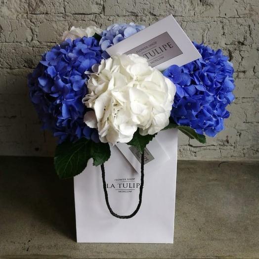 Белые , Голубые и Синие Гортензии /5 шт: букеты цветов на заказ Flowwow