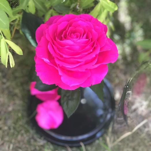 Вечная роза в колбе розовая: букеты цветов на заказ Flowwow