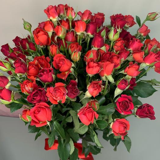 Роза кустовая Голландия