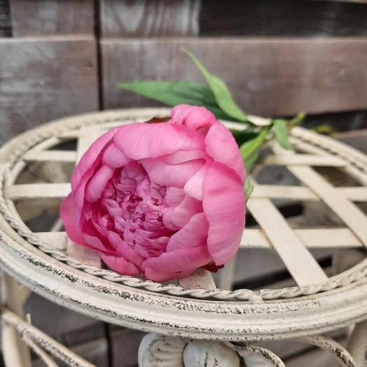 Пион розовый 45 см. поштучно