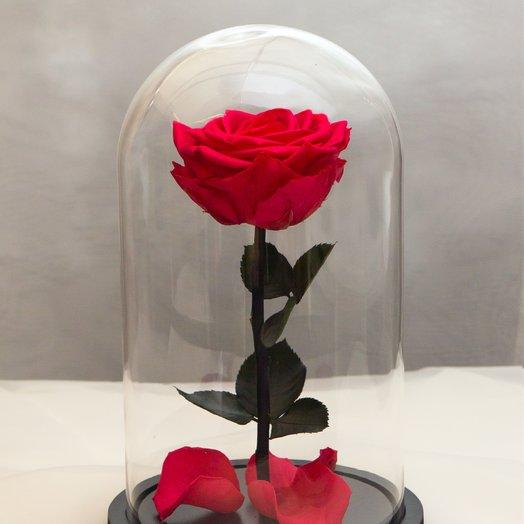 Роза в колбе RozaRose Медиум Алая