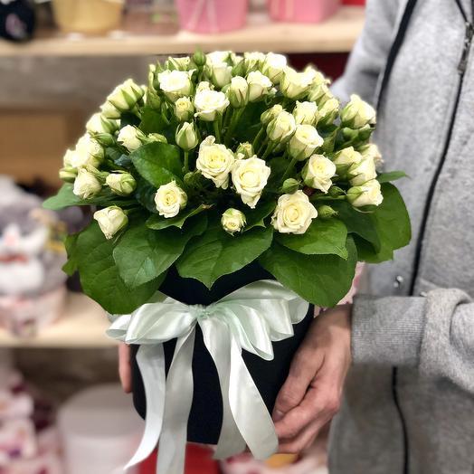 White rose Bush in hatbox