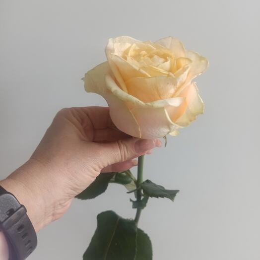 Роза Ирена 40 см
