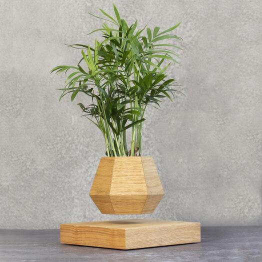 Пальма в светлом кашпо левитация