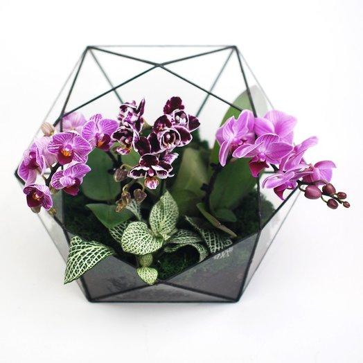 Орхидариум 3: букеты цветов на заказ Flowwow