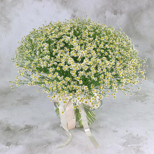 Букет из 51 ромашки-матрикария: букеты цветов на заказ Flowwow