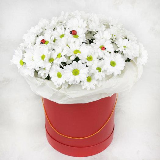 15 белых кустовых хризантем в красной шляпной коробке