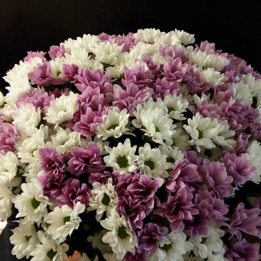 Букет из 25 кустовых хризантем: букеты цветов на заказ Flowwow