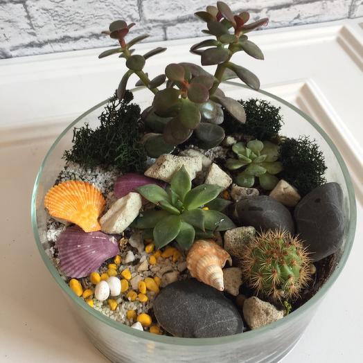 Флорариум «на удачу в деньгах»: букеты цветов на заказ Flowwow