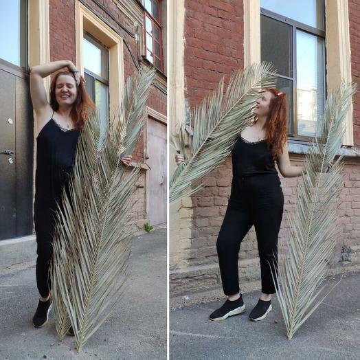 Лист пальмы робелини