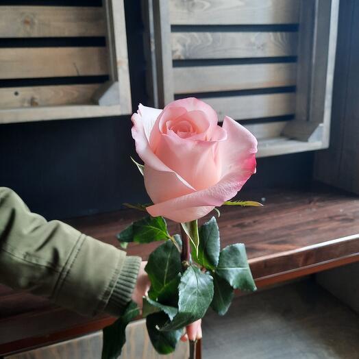 Роза Эквадор Рошлин 60 см