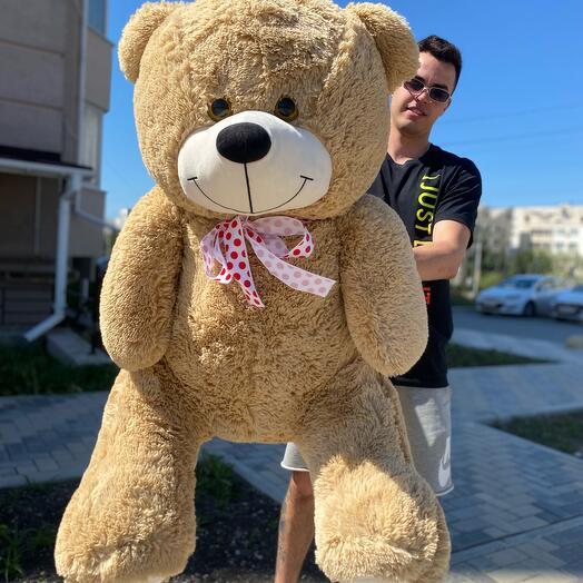 Медведь Марти