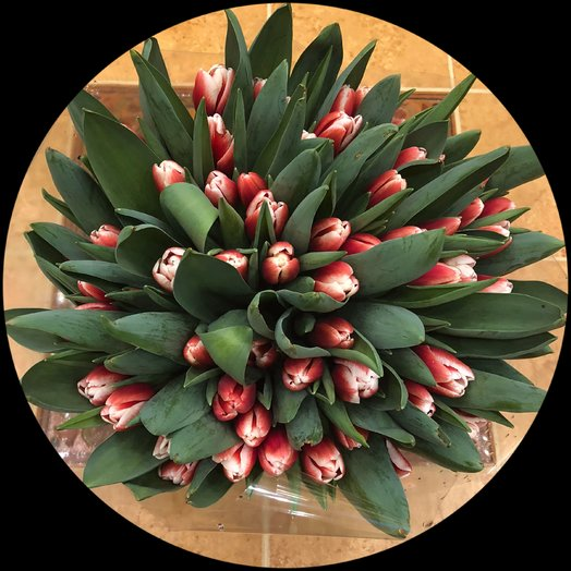 Тюльпаны 51: букеты цветов на заказ Flowwow