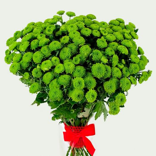 Охапка зелёных хризантем сантини