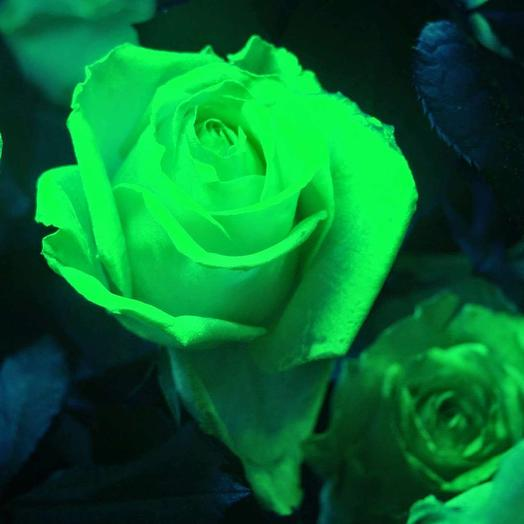 Светящиеся розы