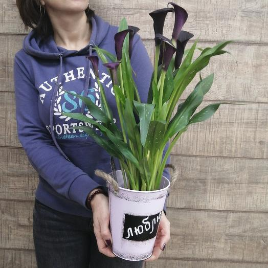 Шикарные каллы в стильном кашпо: букеты цветов на заказ Flowwow