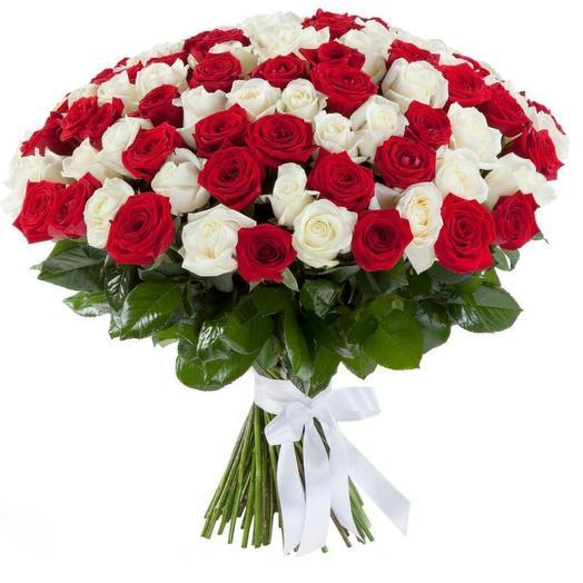 51 красно-белая роза
