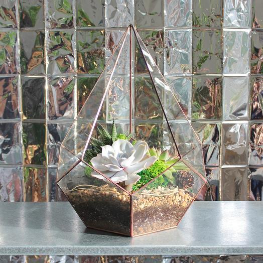 Флорариум Кристалл с 3 Суккулентами