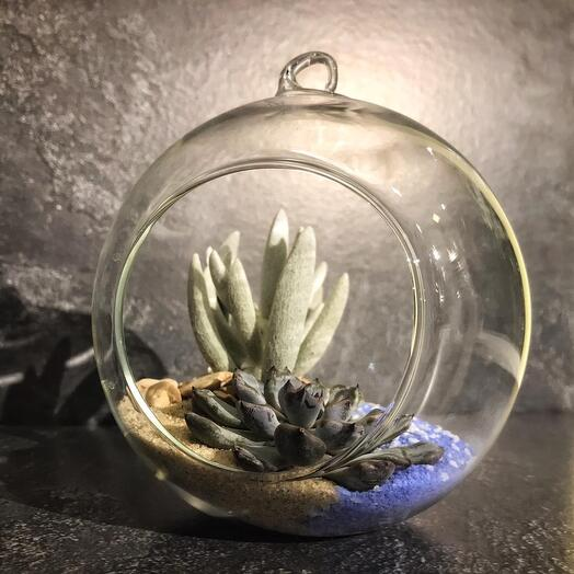 Флорариум подвесной Каменная роза