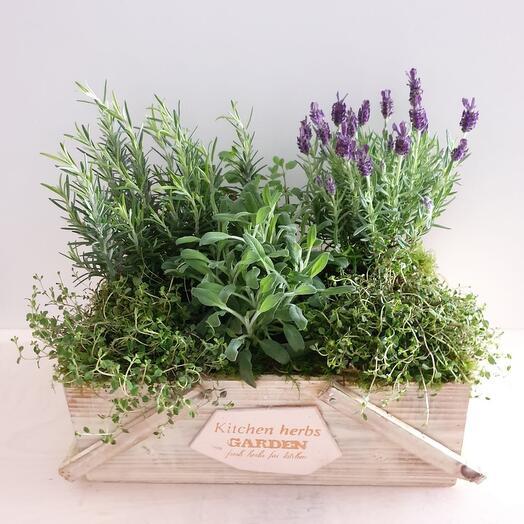 Ящик с ароматными травами