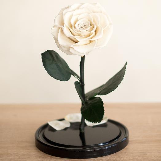 Роза в колбе Премиум белая: букеты цветов на заказ Flowwow