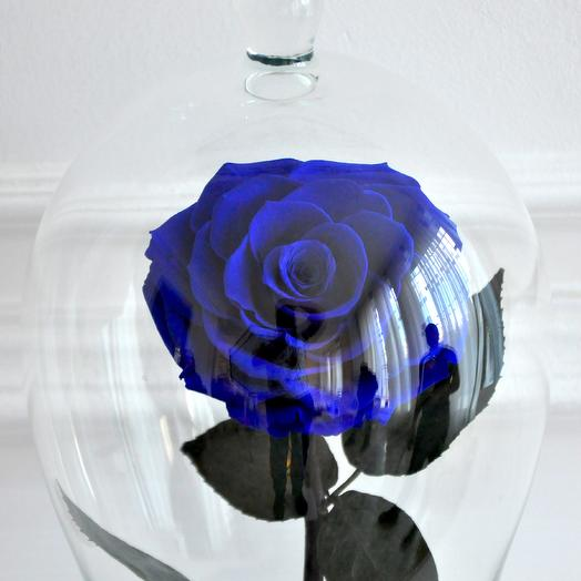 BLUE MARLIN, СИНЯЯ РОЗА В КОЛБЕ PREMIUM: букеты цветов на заказ Flowwow