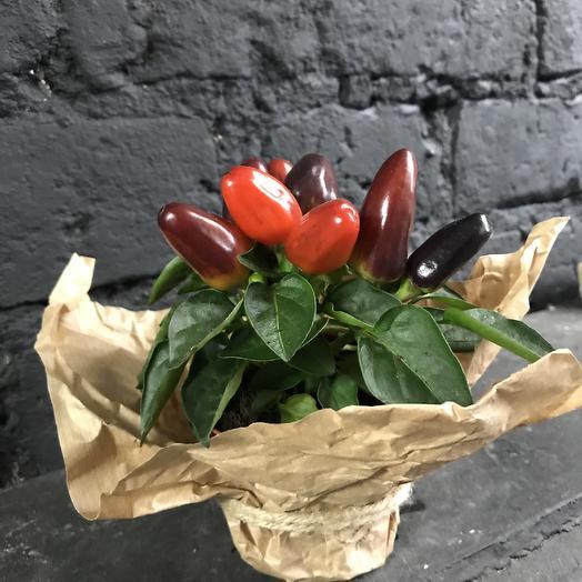 Капсикум сальса: букеты цветов на заказ Flowwow