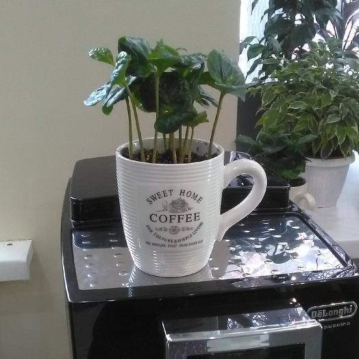 Кофе Арабика в кружке: букеты цветов на заказ Flowwow