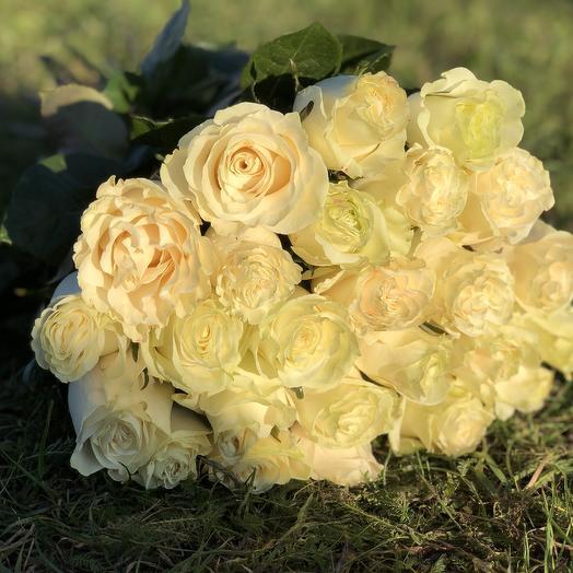 25 белых роз с зеленоватым оттенком высотой 50 см