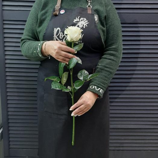 Роза Мондиаль 60см