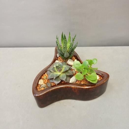 Флорариум в керамике с суккулентами