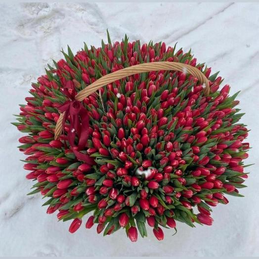 Тюльпаны 501
