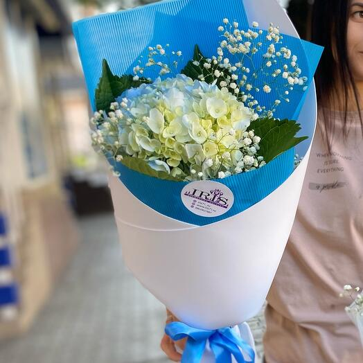 Гортензия в синей упаковке