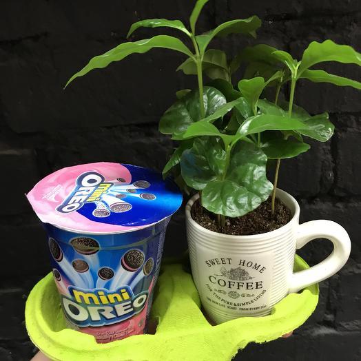 Кофе «Орео»: букеты цветов на заказ Flowwow