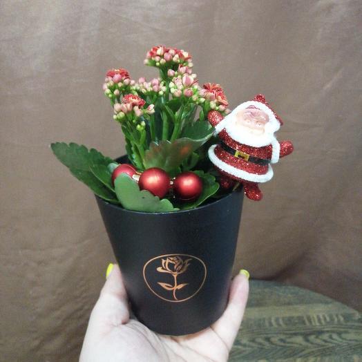Каланхое в кашпо с дедом морозом: букеты цветов на заказ Flowwow