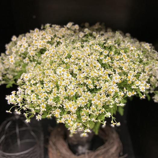 Моно букет с ромашками (51 штука): букеты цветов на заказ Flowwow