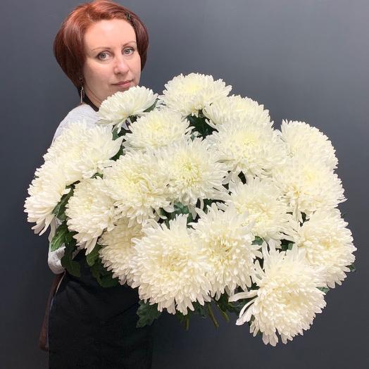 Хризантема Антонов