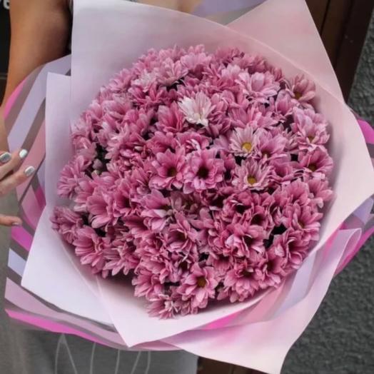 Хризантема ромашка