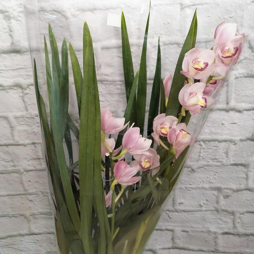 Комнатное растение, орхидея цимбидиум