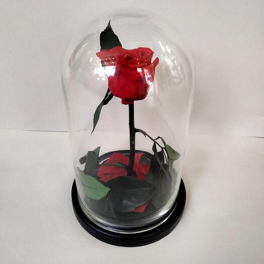 Розы в колбе (в ассортименте)